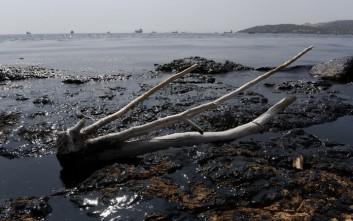 Συναγερμός για την οικολογική καταστροφή στο Σαρωνικό