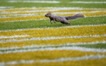 Οι σκίουροι έχουν μια εντυπωσιακή ικανότητα στην… οργάνωση