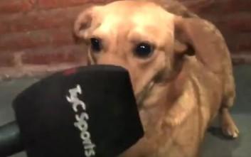 Σκύλος έγινε πρωταγωνιστής σε αγώνα και στο τέλος έδωσε… συνέντευξη