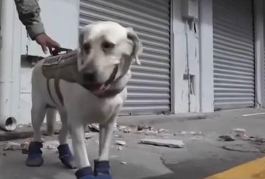 Φρίντα, ο σκύλος που έχει σώσει 52 ζωές στο Μεξικό
