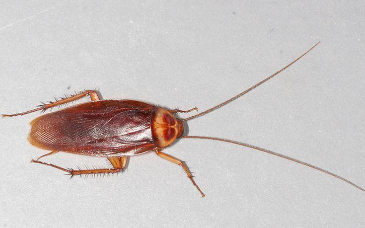 Δύο τρόποι για να εξαφανίσετε τις κατσαρίδες