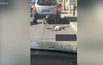 Οργή για ιδιοκτήτη που έδεσε σκυλιά σε αμάξι για να τα εκπαιδεύσει