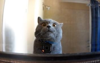 8b8b286b88c6 Τι κάνει μια γάτα όταν φεύγεις από το σπίτι – Newsbeast