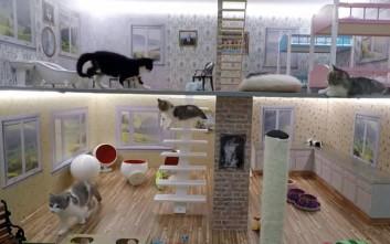 Ποιος δεν θέλει να δει ένα 24ωρο ισλανδικό reality με γατάκια;