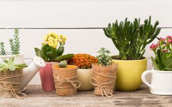 Τέσσερα λουλούδια και φυτά που αντέχουν στο κρύο