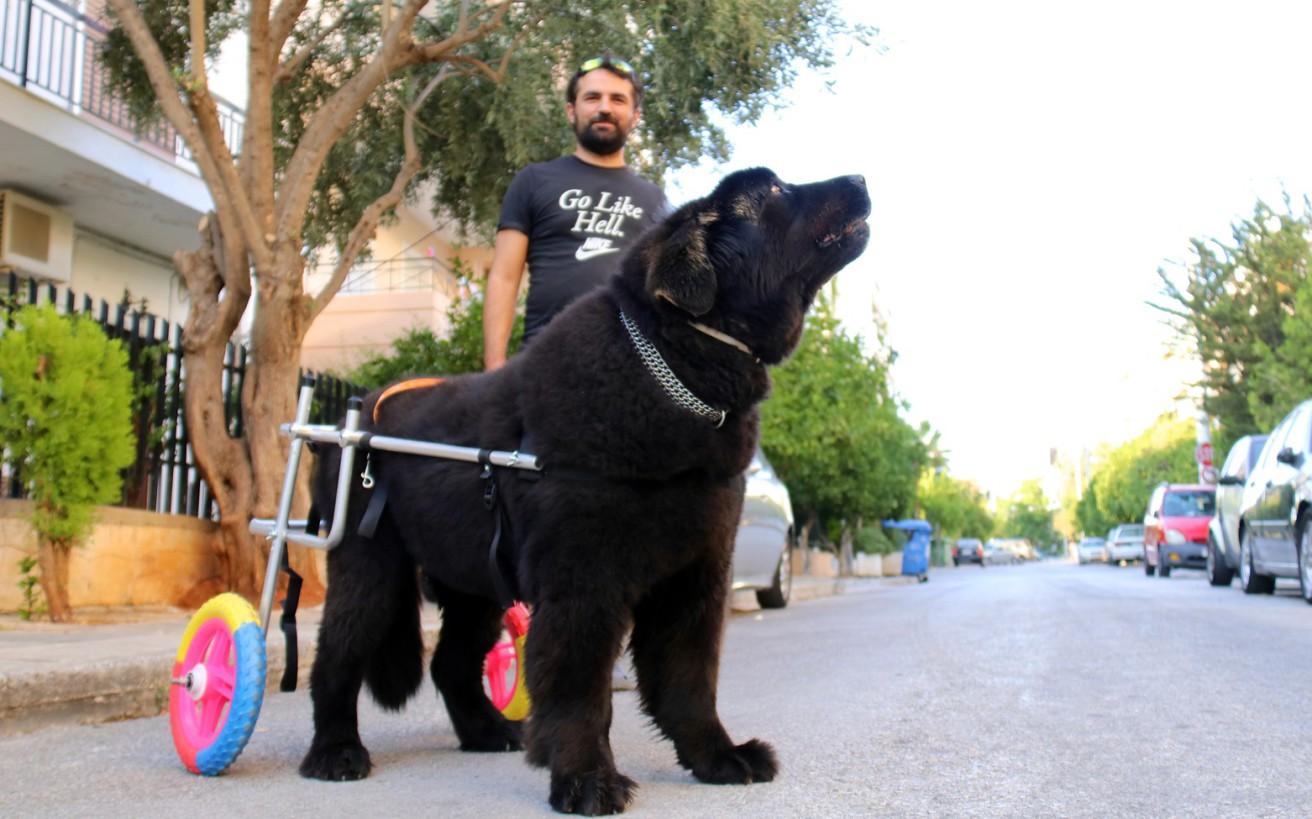 Καρέ-καρέ η δουλειά του ανθρώπου που φτιάχνει αναπηρικά αμαξίδια για ζώα
