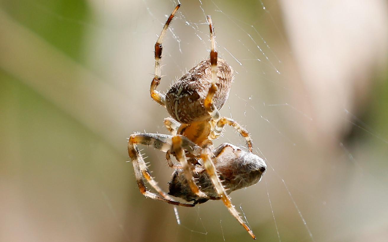 Το δωμάτιο με τις 10.000 αράχνες όπου ελάχιστοι τολμούν να μπουν