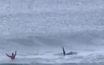 Φάλαινες έσπειραν τον πανικό σε διαγωνισμό σέρφινγκ