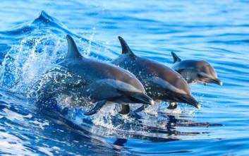 Αν τα δελφίνια είχαν χέρια, οι άνθρωποι θα ήταν… ξεγραμμένοι!