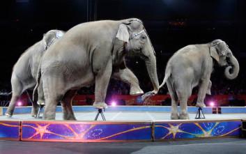 H Νέα Υόρκη απαγορεύει πλέον στα τσίρκο να χρησιμοποιούν ελέφαντες