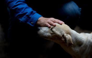 H επιστήμη επιβεβαιώνει ότι τα σκυλιά κάνουν ιδιαίτερες γκριμάτσες στους ανθρώπους