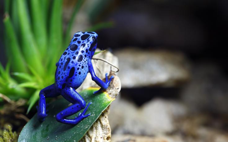 μπλέ χρώμα ζώα