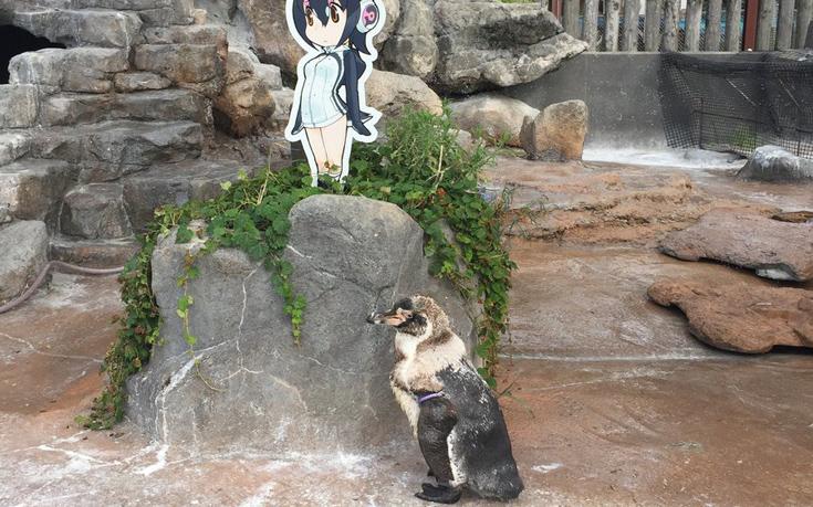 Πιγκουίνος πεθαίνει δίπλα στη χαρτονένια φίλη του