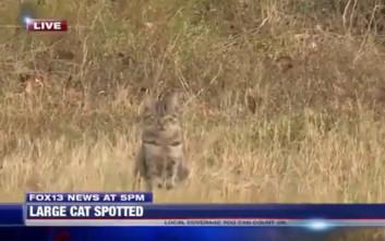 Ρεπόρτερ μιλούσε για «μεγάλες γάτες» και του έκανε χαλάστρα μια… ψιψίνα