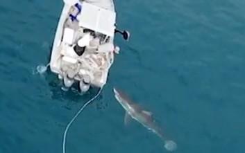 Τεράστιος λευκός καρχαρίας… τσιμπολογά βάρκα