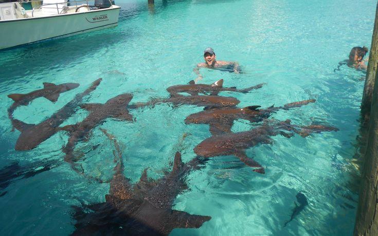 Κολυμπώντας σε μια πισίνα γεμάτη καρχαρίες