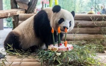 meng meng panda