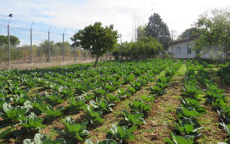 Έκκληση στις αγροδιατροφικές επιχειρήσεις να «οπλιστούν» για τη Συμφωνία των Πρεσπών