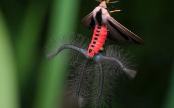 Το «εξωγήινο» έντομο που προκαλεί ανατριχίλα