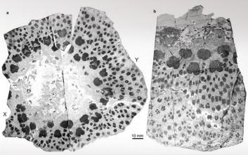 Βρέθηκαν απολιθώματα δέντρου ηλικίας 374 εκατ. ετών