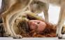 Καλλιτέχνης γονιμοποίησε το ωάριό της με κύτταρα σκύλου και θηλάζει κουτάβι