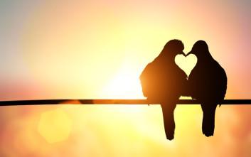 Ο αμερικανικός ΕΟΦ καταλήγει πως η αγάπη δεν είναι συστατικό