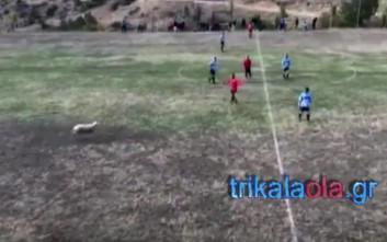 Πρόβατο διέκοψε ποδοσφαιρικό αγώνα στα Τρίκαλα