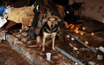 Τα αδέσποτα ζώα της δυτικής Αττικής εκπέμπουν SOS