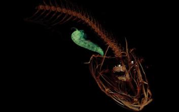 Ψάρι βρέθηκε να ζει σε βάθος… 8 χιλιομέτρων