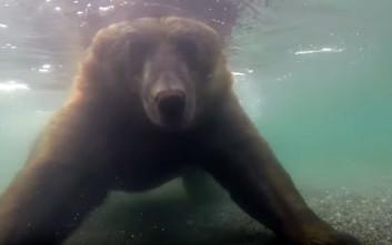 Πώς ψαρεύει μια αρκούδα το θήραμά της καρέ-καρέ