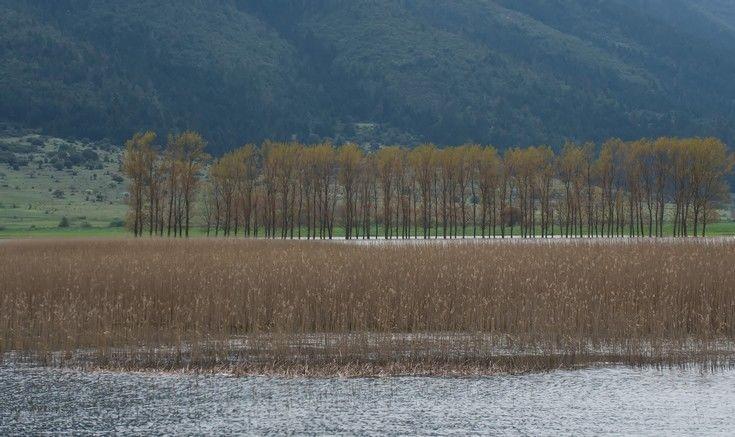 Ολοκληρώθηκε η τρίτη κοπή καλαμιών για τη αποκατάσταση της λίμνης Στυμφαλίας