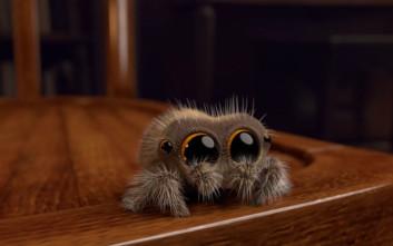 Το animation που θα σας κάνει να λατρέψετε τις… αράχνες