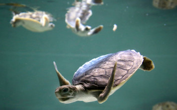 Δέκα παράξενα δεδομένα και αλήθειες για τις χελώνες