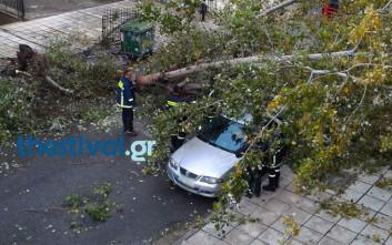 Δέντρο έπεσε πάνω σε οχήματα στον Εύοσμο