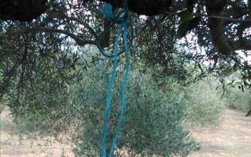 Φρίκη στο Ηράκλειο με κρεμασμένο σκυλί σε δέντρο