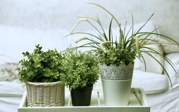 Δυναμώστε τα φυτά σας με οικονομικό τρόπο