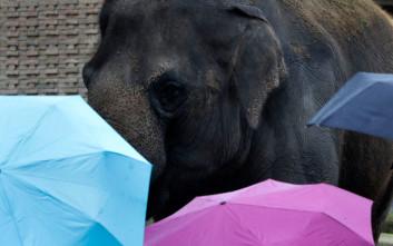 Μια μήνυση δίνει ανθρώπινη υπόσταση σε τρεις ελέφαντες ως «νομικά πρόσωπα»