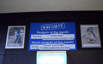 Ενυδρείο ντροπιάζει τους άτακτους πιγκουίνους