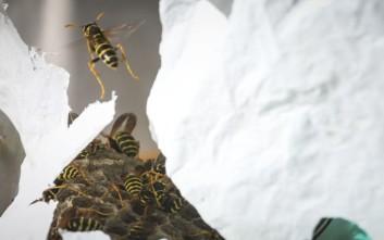 Τι να κάνετε αν σας τσιμπήσει μέλισσα, σφήκα, δράκαινα ή μέδουσα