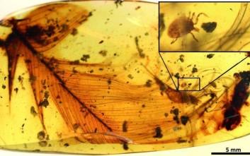 Ανακαλύφθηκαν τα πρώτα τσιμπούρια που ήταν πάνω στους δεινοσαύρους