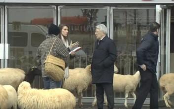 Πρόβατα πήγαν να βοσκήσουν στο νέο γήπεδο της Ατλέτικο Μαδρίτης