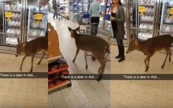 Το ελάφι πήγε για… ψώνια στο σούπερ μάρκετ