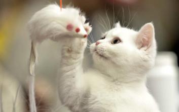 Αυστηρή η ποινή για τον νεαρό που στραγγάλισε γατάκι