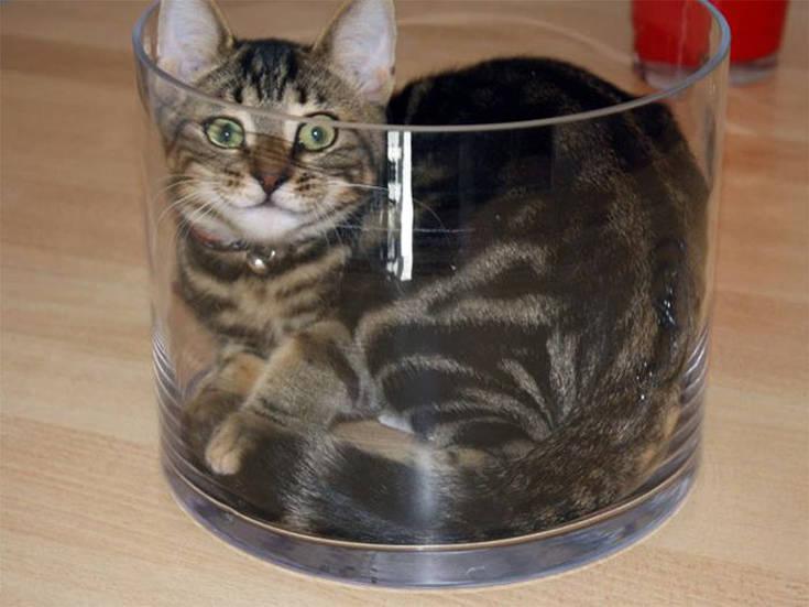909dafe0c41f cats2 cats3 cats4 cats1 cats5 cats8 cats12 ...