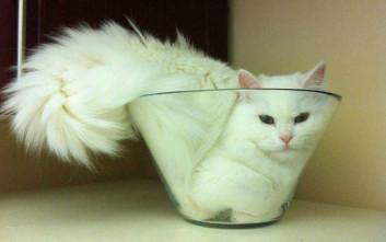 6e47c2f7c4e2 Είναι γάτες και χωράνε παντού – Newsbeast