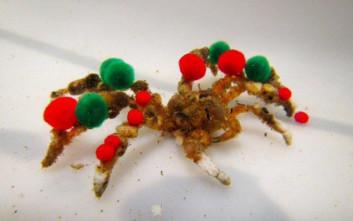 Να γιατί στολίστηκε… χριστουγεννιάτικα αυτό το καβούρι