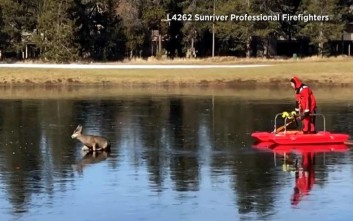 Πυροσβέστης σώζει ελάφι από παγωμένη λίμνη