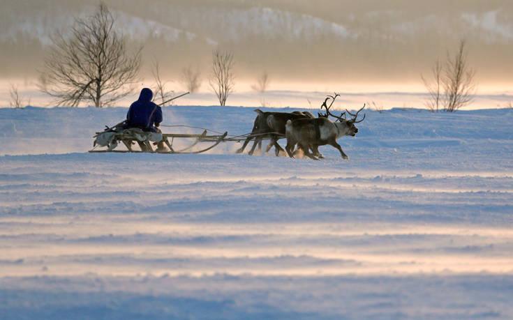 χριστουγεννιάτικες ιστορίες ζώα