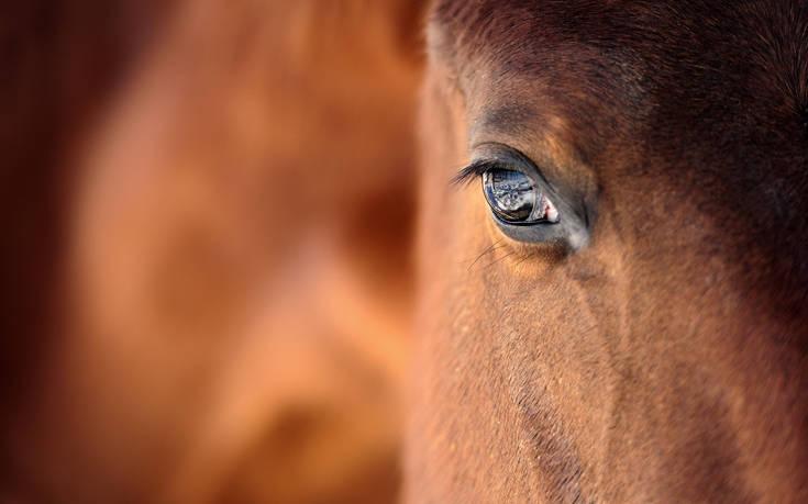 Η απίστευτη δικαιολογία ενός άνδρα που έκανε σεξ… με άλογο