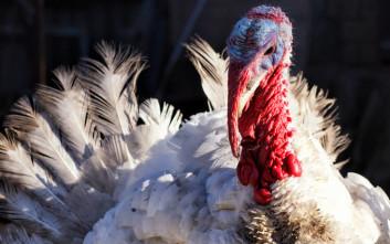 Τρία απόλυτα χριστουγεννιάτικα ζώα και πώς συνδέθηκαν με τις γιορτές